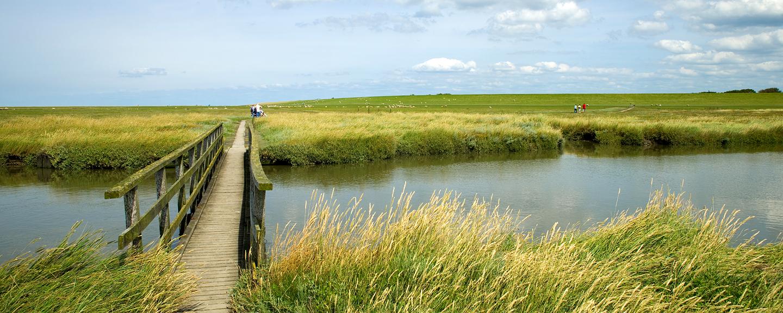 Landschaft Moor
